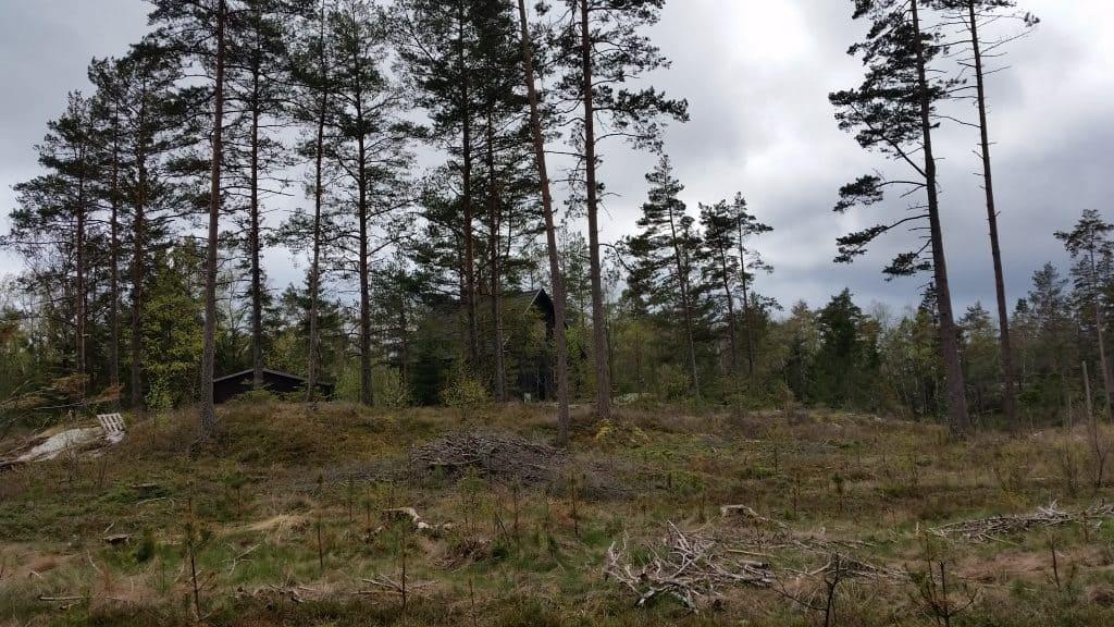 Van quarantaine naar quarantaine met Zweeds Huisje 'Dutch Treat'