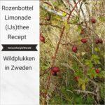 Recept Rozenbottellimonade en (IJs)thee - Wildplukken in Zweden