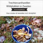 Trechtercantharellen - Wildplukken in Zweden